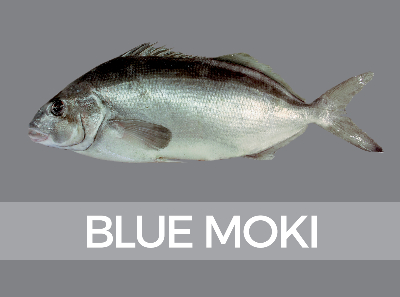 bluemoki-species-id