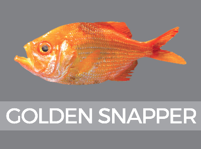 goldensnapper-species-id