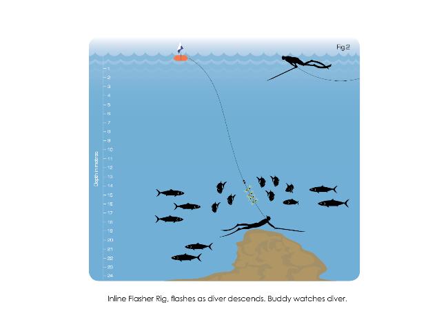 Kingfish - Hunting Tips