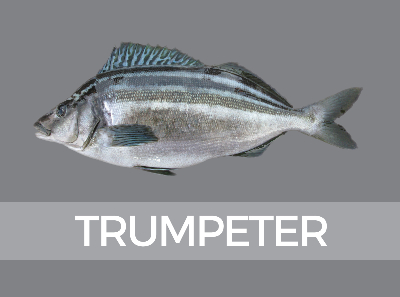 tumpeter-780