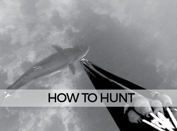 LANDING HOW TO HUNT