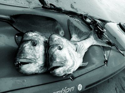 Snap Yak Attack   Spearfishing Fish   Ocean Hunter