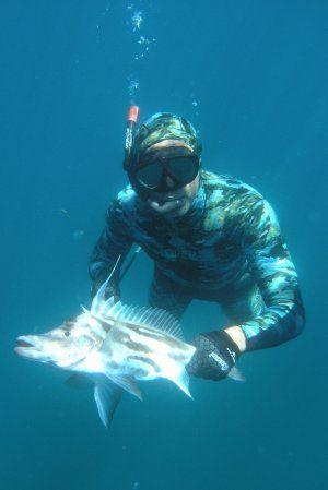 Giant Boarfish Spearfishing Nz Ocean Hunter