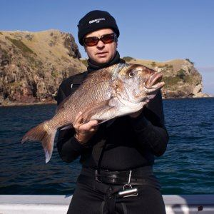 Snapper Spearfishing In New Zealand Ocean Hunter